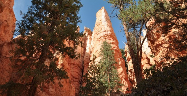 Navajo Loop trail in Bryce Canyon National Park